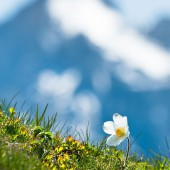 Spring in the Dolomites