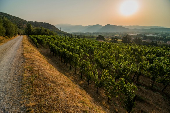 Franciacorta Extension: Italy's Other Sparkler