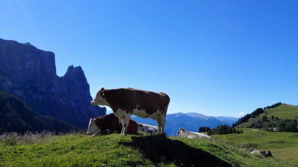 Hiking around Alpe di Siusi