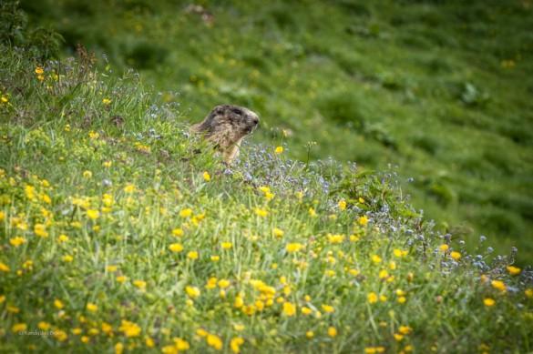 Dolomites wildlife